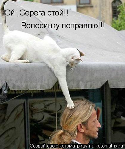 Котоматрица: Ой ,Серега стой!! Волосинку поправлю!!!