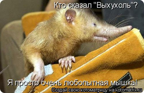 """Котоматрица: Кто сказал """"Выхухоль""""? Я просто очень любопытная мышка!"""