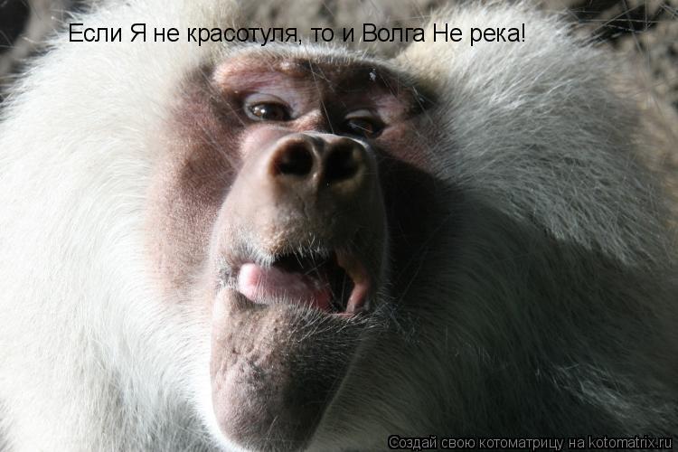 Котоматрица: Если Я не красотуля, то и Волга Не река!