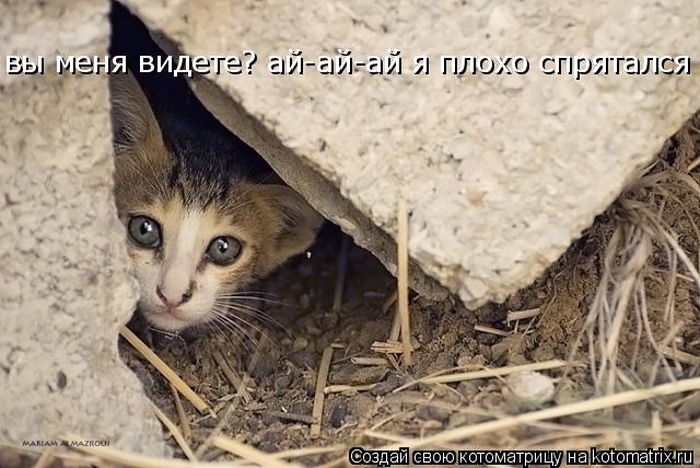 Котоматрица: вы меня видете? ай-ай-ай я плохо спрятался