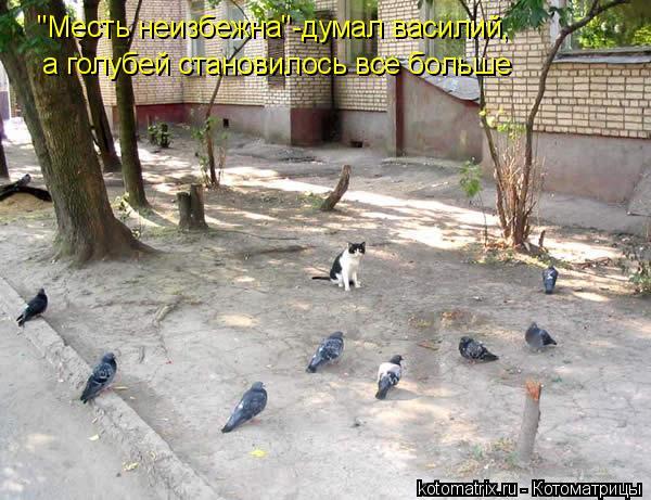 """Котоматрица: """"Месть неизбежна""""-думал василий, а голубей становилось все больше"""
