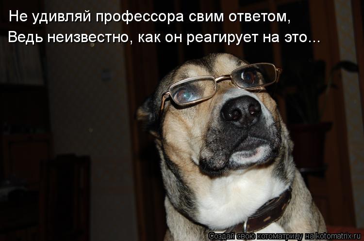 Котоматрица: Не удивляй профессора свим ответом, Ведь неизвестно, как он реагирует на это...