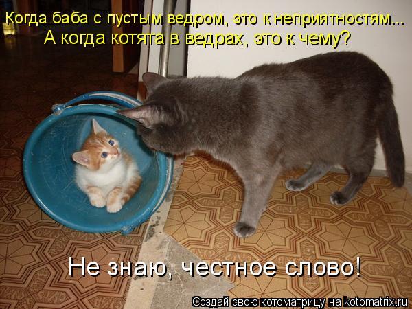 Котоматрица: Когда баба с пустым ведром, это к неприятностям... А когда котята в ведрах, это к чему? Не знаю, честное слово!