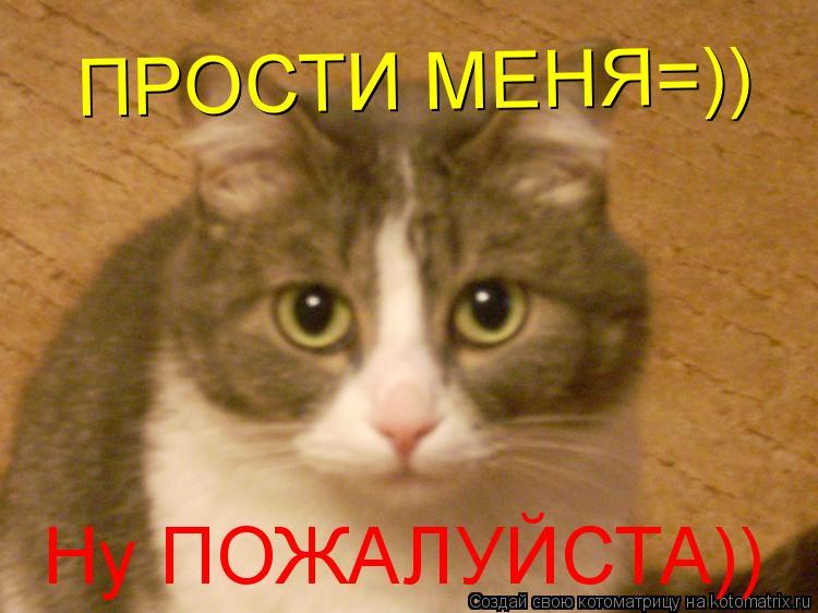 Котоматрица: Ну ПОЖАЛУЙСТА)) ПРОСТИ МЕНЯ=))