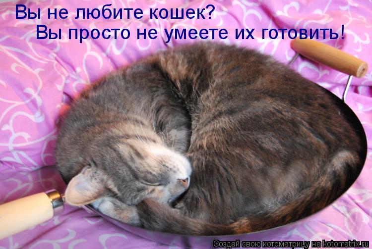 Котоматрица: Вы не любите кошек?  Вы просто не умеете их готовить!
