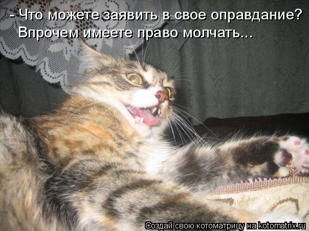 Котоматрица: - Что можете заявить в свое оправдание? Впрочем имеете право молчать...