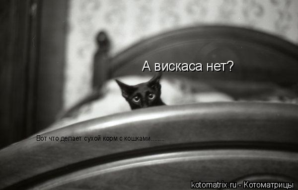 Котоматрица: А вискаса нет? Вот что делает сухой корм с кошками........