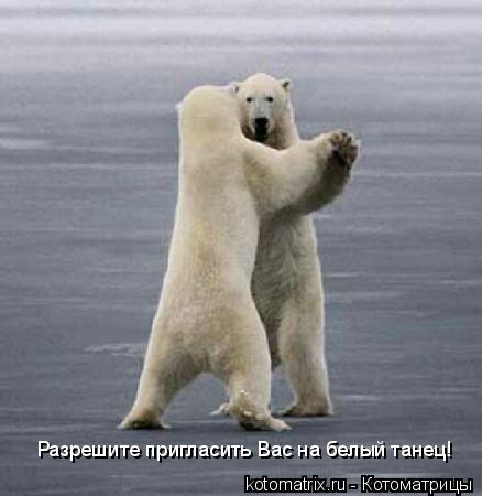 Котоматрица: Разрешите пригласить Вас на белый танец!