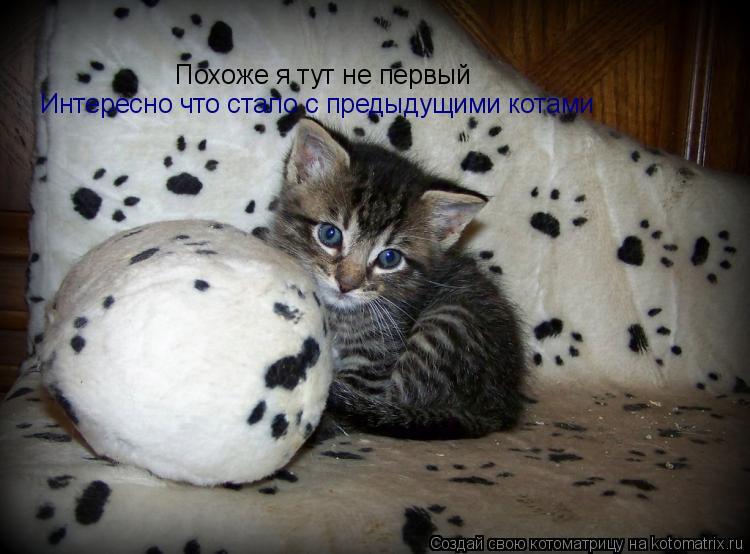 Котоматрица: Похоже я тут не первый Интересно что стало с предыдущими котами