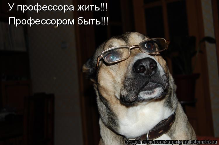 Котоматрица: У профессора жить!!! Профессором быть!!!