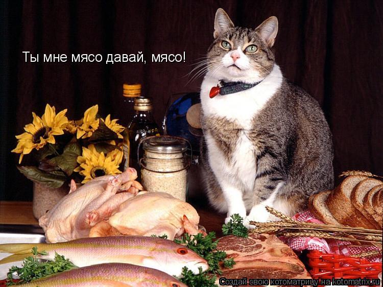 Котоматрица: Ты мне мясо давай, мясо!