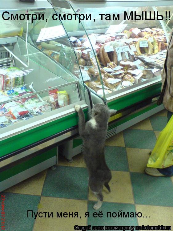 Котоматрица: Смотри, смотри, там МЫШЬ!! Пусти меня, я её поймаю...