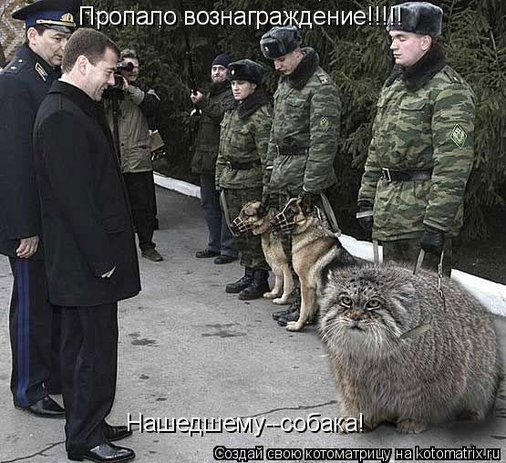 Котоматрица: Пропало вознаграждение!!!!! Нашедшему--собака!