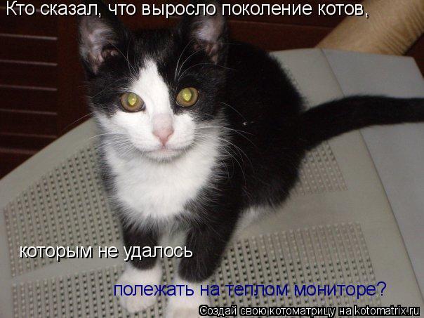 Котоматрица: Кто сказал, что выросло поколение котов, которым не удалось полежать на теплом мониторе?