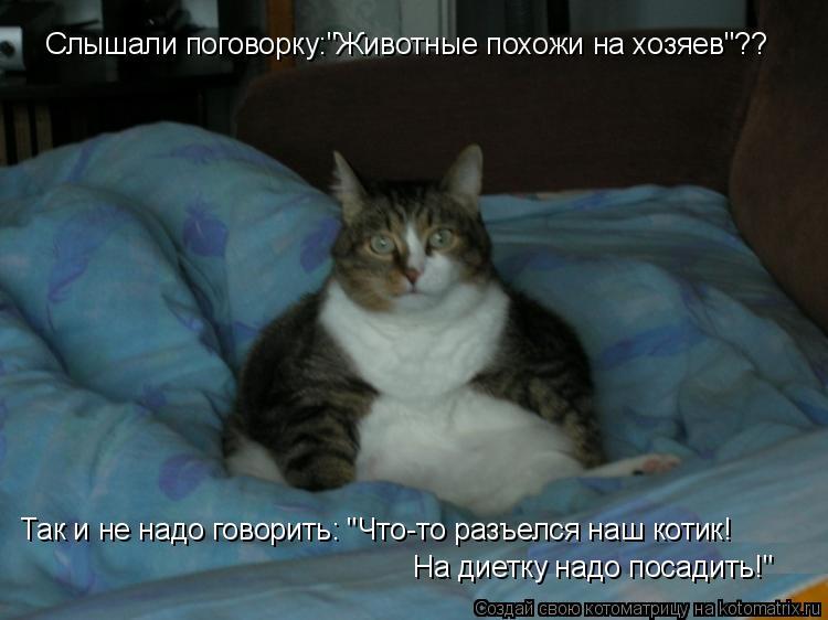 """Котоматрица: Слышали поговорку:""""Животные похожи на хозяев""""?? Так и не надо говорить: """"Что-то разъелся наш котик! На диетку надо посадить!"""""""