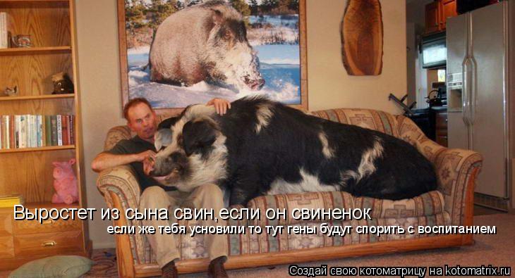 Котоматрица: Выростет из сына свин,если он свиненок если же тебя усновили то тут гены будут спорить с воспитанием