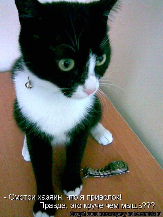 Котоматрица: - Смотри хазяин, что я приволок! Правда, это круче чем мышь???