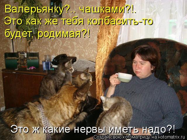 Котоматрица: Валерьянку?.. чашками?!. Это как же тебя колбасить-то  будет, родимая?! Это ж какие нервы иметь надо?!