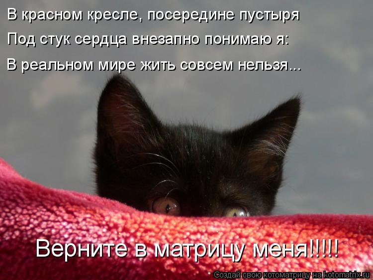 Котоматрица: В красном кресле, посередине пустыря Под стук сердца внезапно понимаю я: В реальном мире жить совсем нельзя... Верните в матрицу меня!!!!!