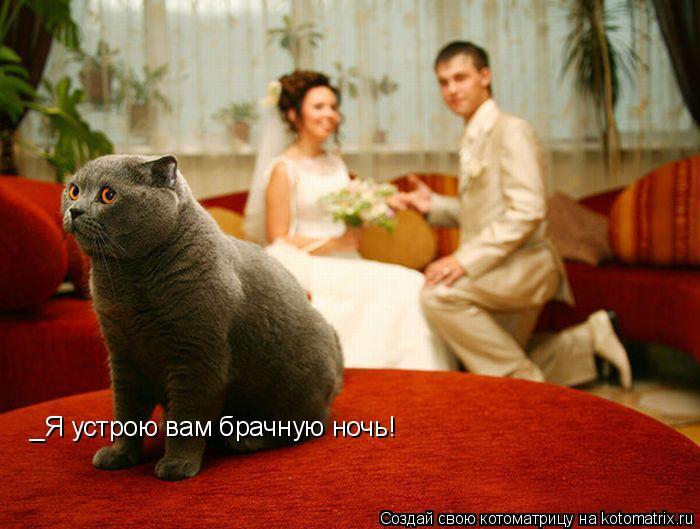 Котоматрица: _Я устрою вам брачную ночь!