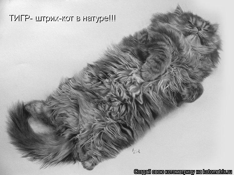 Котоматрица: ТИГР- штрих-кот в натуре!!!