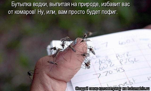 Котоматрица: Бутылка водки, выпитая на природе, избавит вас от комаров! Ну, или, вам просто будет пофиг.