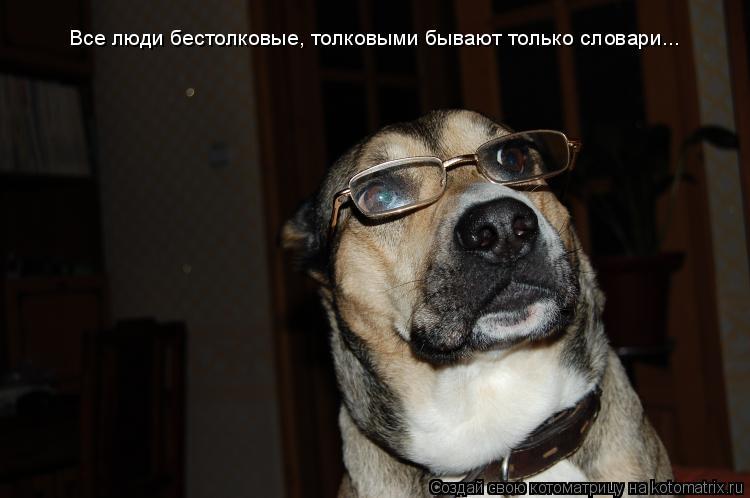 Котоматрица: Все люди бестолковые, толковыми бывают только словари...