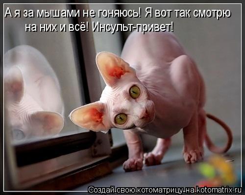 Котоматрица: А я за мышами не гоняюсь! Я вот так смотрю на них и всё! Инсульт-привет!