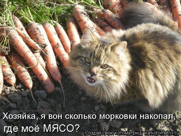 Котоматрица: Хозяйка, я вон сколько морковки накопал,  где моё МЯСО?