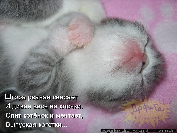 Котоматрица: Выпуская коготки... Спит котёнок и мечтает, И диван весь на клочки. Штора рваная свисает
