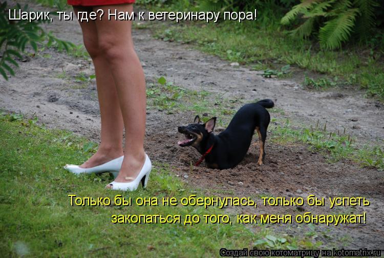 Котоматрица: Шарик, ты где? Нам к ветеринару пора! Только бы она не обернулась, только бы успеть закопаться до того, как меня обнаружат!
