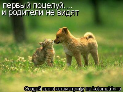 Котоматрица: первый поцелуй.... и родители не видят и родители не видят