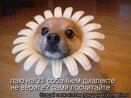 Котоматрица: лаю на 21 собачьем диалекте не верите? сами посчитайте