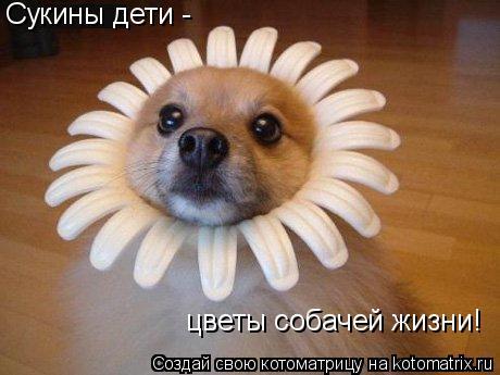 Котоматрица: Сукины дети -  цветы собачей жизни!