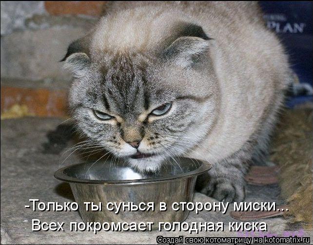 Котоматрица: -Только ты сунься в сторону миски... Всех покромсает голодная киска