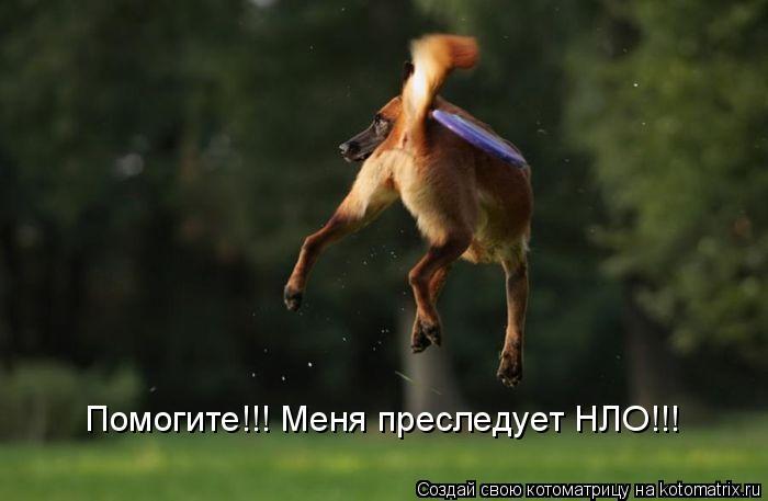 Котоматрица: Помогите!!! Меня преследует НЛО!!!
