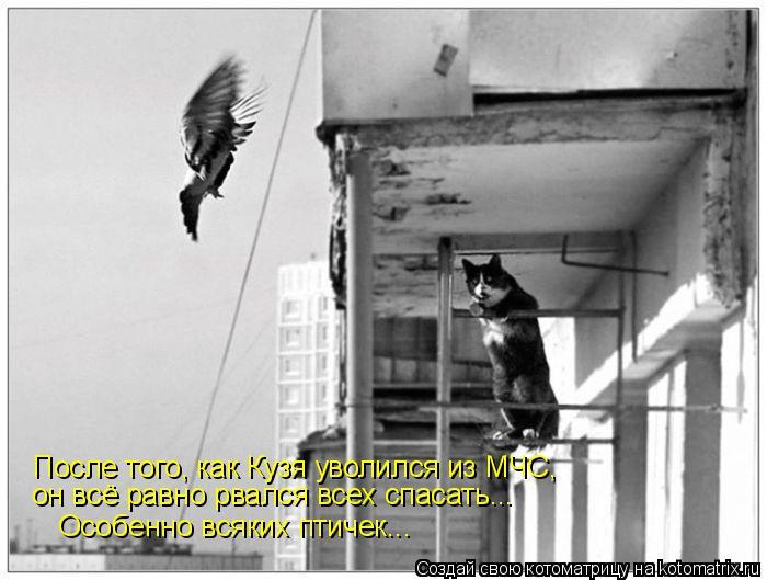 Котоматрица: После того, как Кузя уволился из МЧС, он всё равно рвался всех спасать... Особенно всяких птичек...