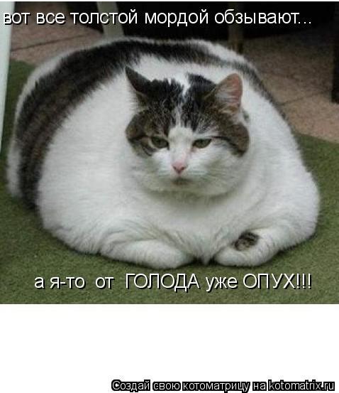 Котоматрица: вот все толстой мордой обзывают... а я-то  от  ГОЛОДА уже ОПУХ!!!