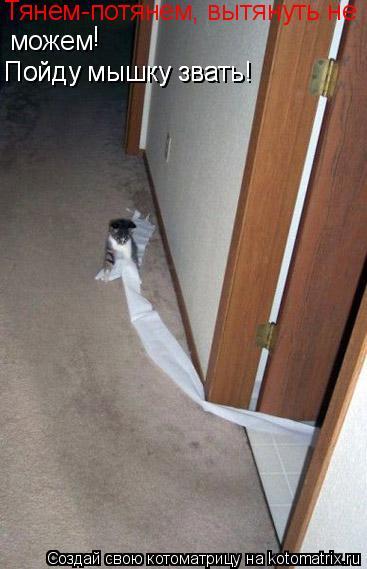 Котоматрица: Тянем-потянем, вытянуть не можем ! Пойду мышку звать! Пойду мышку звать!