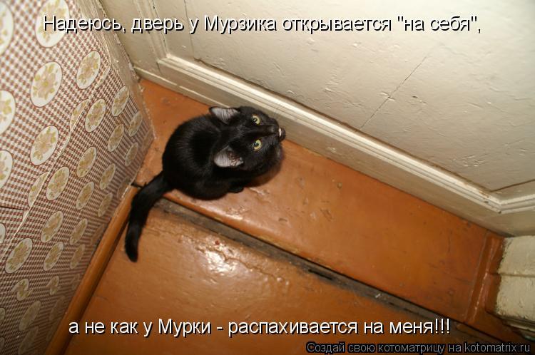 """Котоматрица: Надеюсь, дверь у Мурзика открывается """"на себя"""", а не как у Мурки - распахивается на меня!!!"""