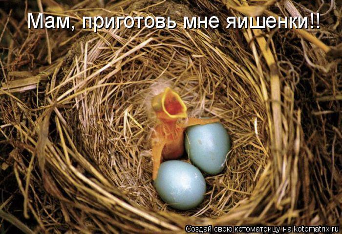 Котоматрица: Мам, приготовь мне яишенки!!