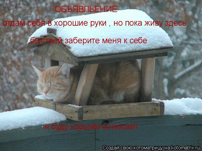Котоматрица: ОБЪЯВЛЬЕНИЕ отдам себя в хорошие руки , но пока живу здесь быстрей заберите меня к себе я буду хоршим котиком!!
