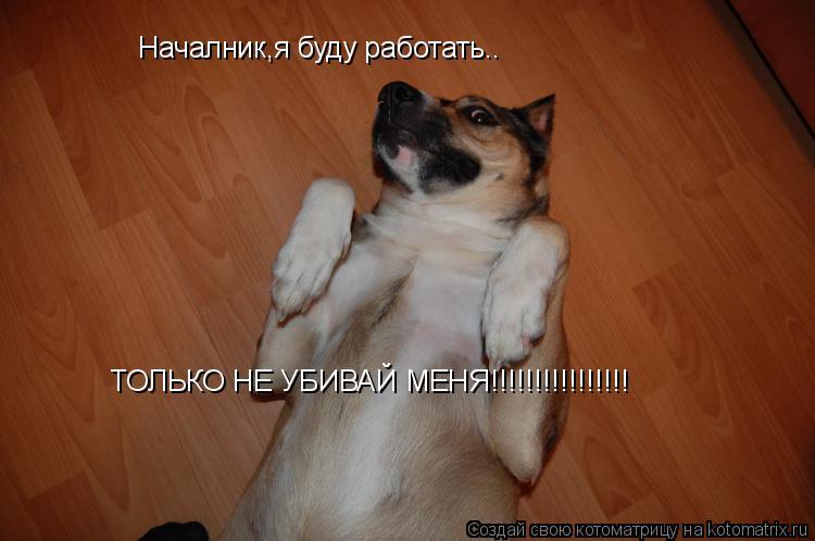 Котоматрица: Началник,я буду работать.. ТОЛЬКО НЕ УБИВАЙ МЕНЯ!!!!!!!!!!!!!!!!