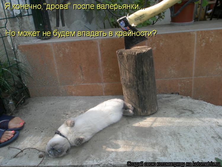"""Котоматрица: Я,конечно,""""дрова"""" после валерьянки... Но может не будем впадать в крайности?"""