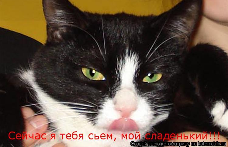 Котоматрица: Сейчас я тебя сьем, мой сладенький!!!