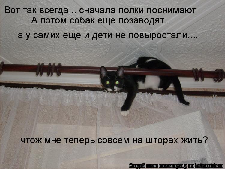 Котоматрица: Вот так всегда... сначала полки поснимают А потом собак еще позаводят... а у самих еще и дети не повыростали.... чтож мне теперь совсем на штора