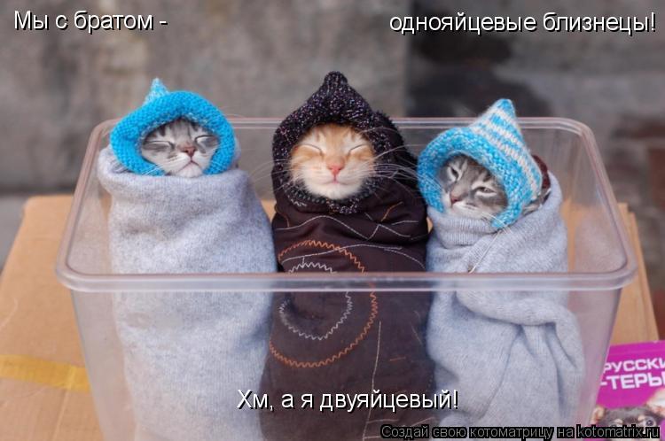 Котоматрица: Мы с братом - Хм, а я двуяйцевый! однояйцевые близнецы!