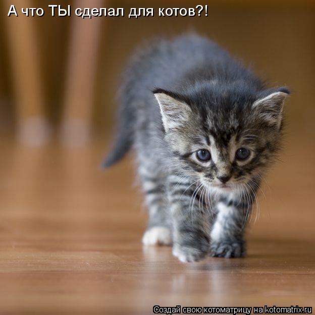 Котоматрица: А что ТЫ сделал для котов?!