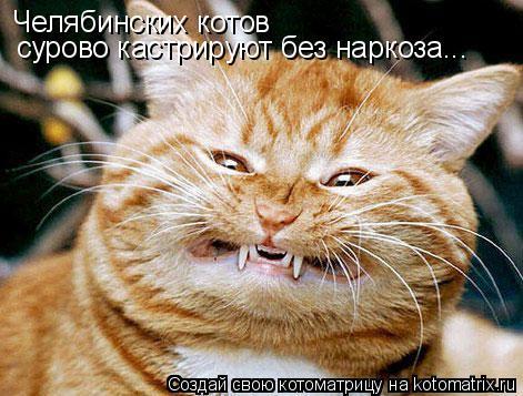 Котоматрица: Челябинских котов сурово кастрируют без наркоза...