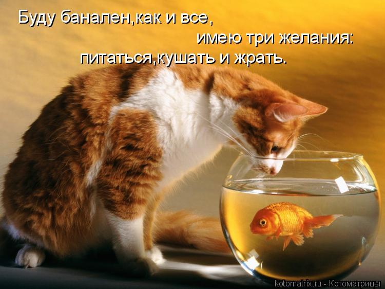 Котоматрица: Буду банален,как и все, имею три желания: питаться,кушать и жрать.